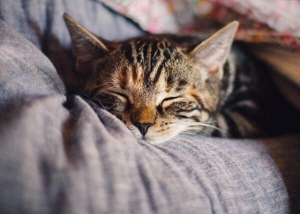Cat feeding guide, kitten sleeping