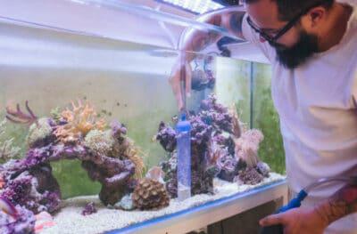 Fish tank setup cleaning