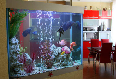 How to set up a fish tank in the kitchen