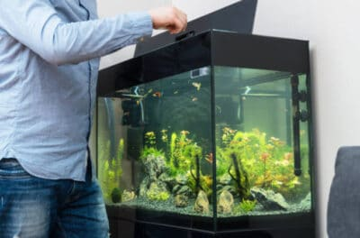 Selection the right fish tank