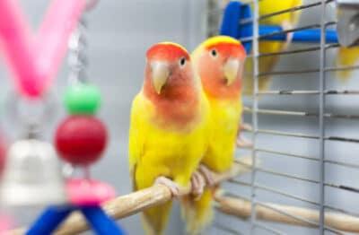 Pet bird care for 2 birds