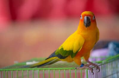 Pet bird care guide