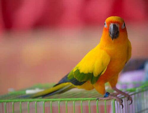 Pet Bird Care Guide