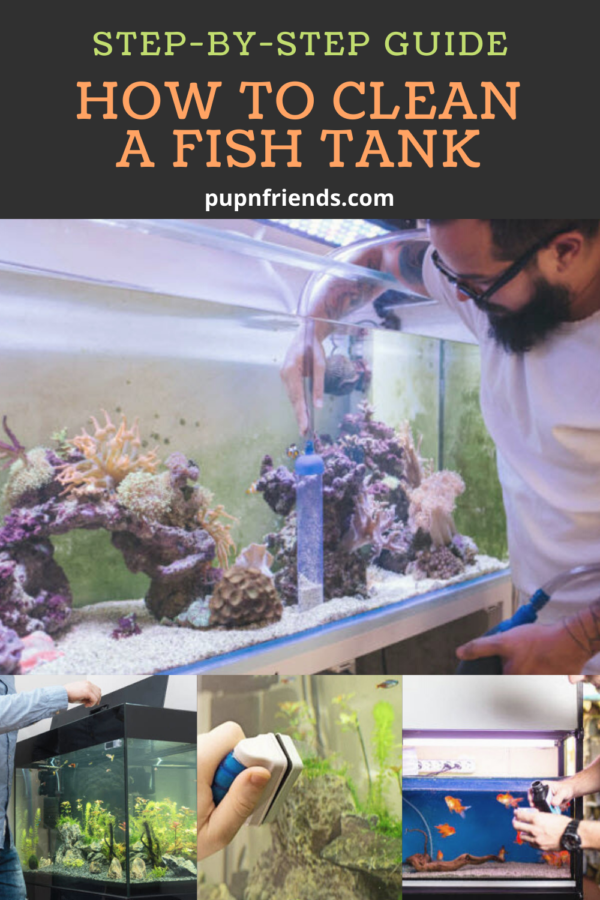 How to Clean a Fish Tank #pupnfriends