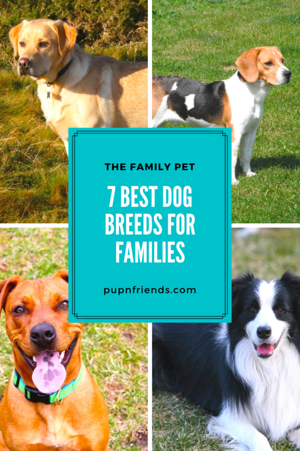 7 Best Dog Breeds for Families #pupnfriends