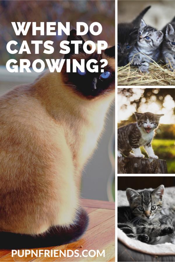 When do cats stop growing? #pupnfriends