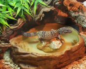 How to set up a leopard gecko habitat
