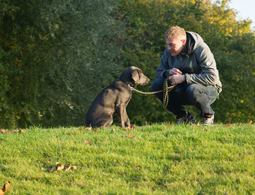 18 Most Useful Tips for New Dog Owners