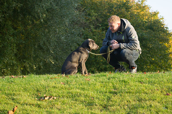 Tips for new dog owners