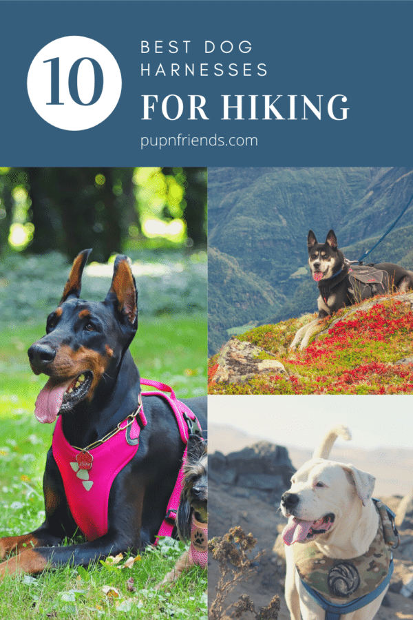 Best Dog Harness for Hiking #pupnfriends