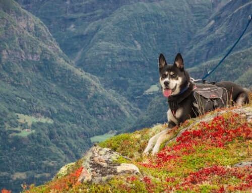 10 Best Dog Harnesses For Hiking