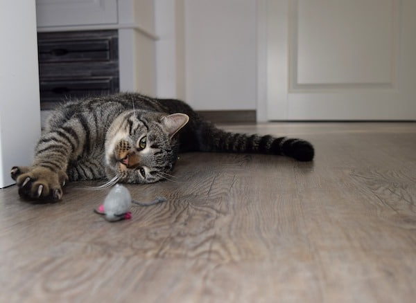 Best cat nail clippers - A cat laying in a hall