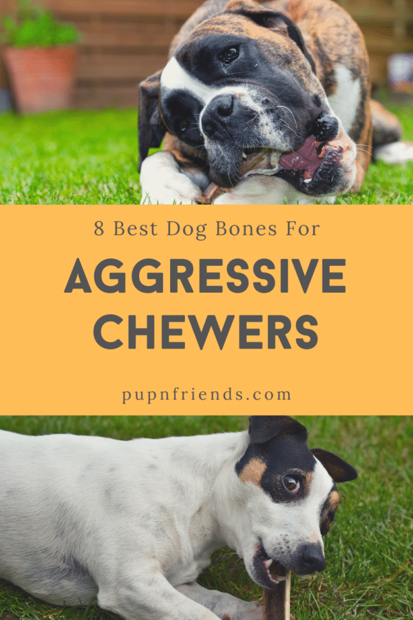8 Best Dog Bones for Aggressive Chewers #pupnfriends
