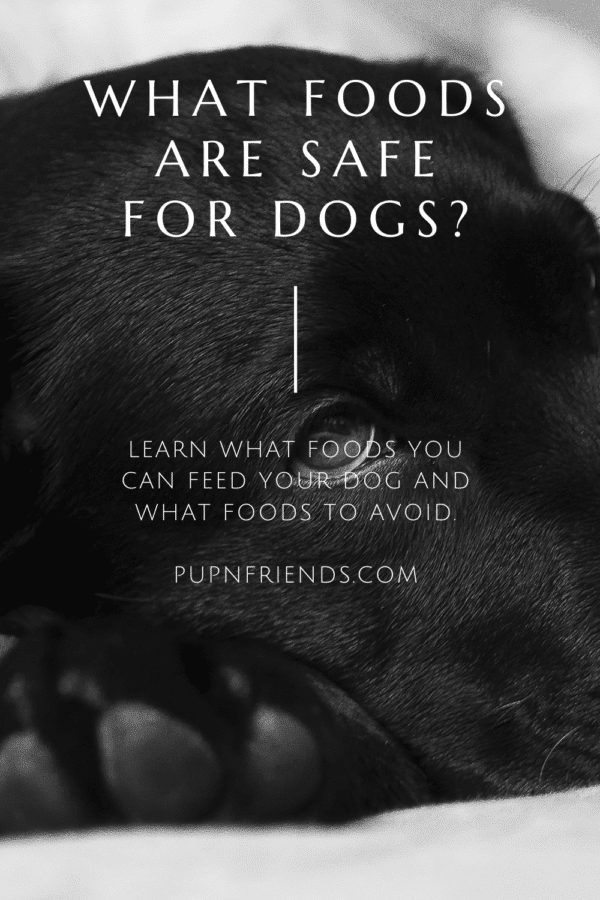 What foods are safe for dogs? #pupnfriends
