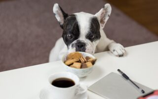 What foods are safe for dogs