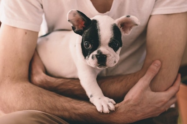 Tips for Caring for Your First French Bulldog