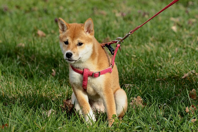 8 Best Dog Collars For Pulling
