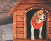 Best dog houses for hot weather