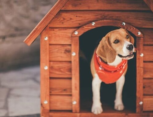 9 Best Dog Houses for Hot Weather