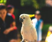 Best birds for beginners