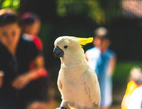 6 Best Pet Birds for Beginners