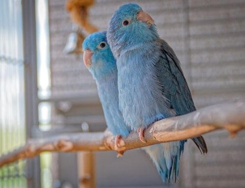 Is a Pet Bird Right for Me?