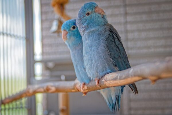 Is a pet bird right for me
