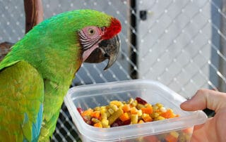 What do you feed pet birds