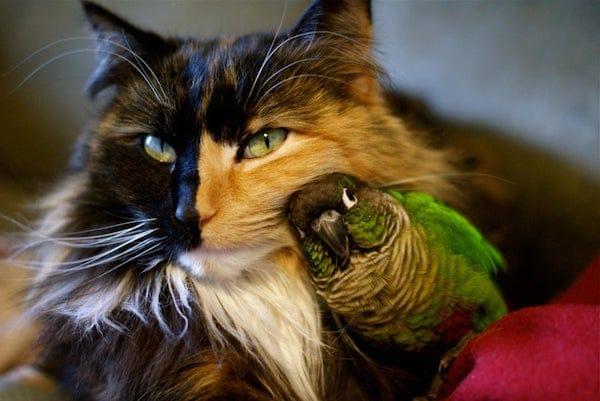 Pet bird with cats
